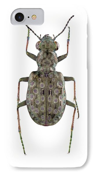 Ground Beetle IPhone Case by F. Martinez Clavel