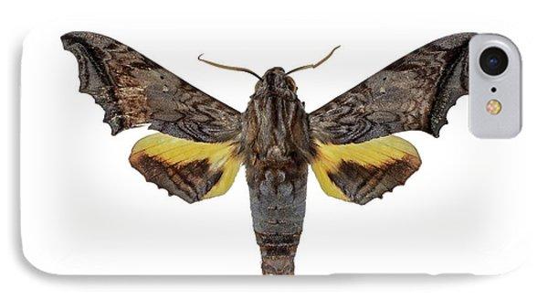 Hawk Moth IPhone Case by F. Martinez Clavel