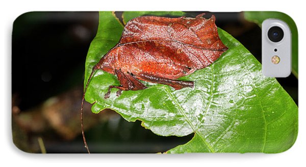 Leaf Mimic Katydid IPhone 7 Case by Dr Morley Read