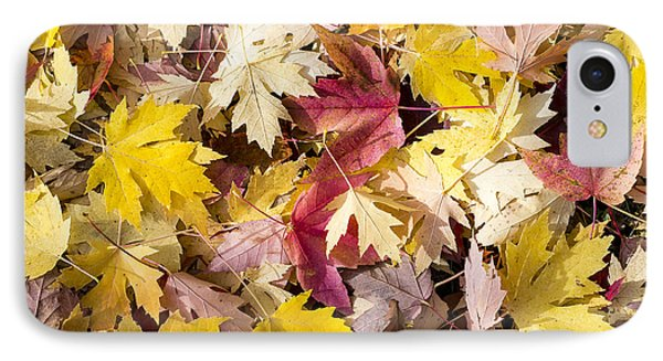 Maple Leaves Phone Case by Steven Ralser
