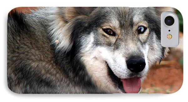 Miley The Husky With Blue And Brown Eyes  IPhone Case by Doc Braham