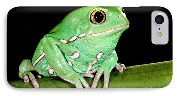 Painted Monkey Frog Phyllomedusa IPhone Case by David Northcott