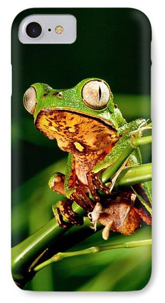 Razor Backed Monkey Frog Phyllomedusa IPhone Case by David Northcott