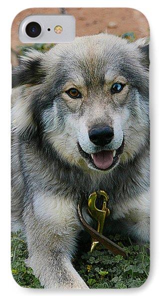Siberian Husky IPhone Case by Doc Braham