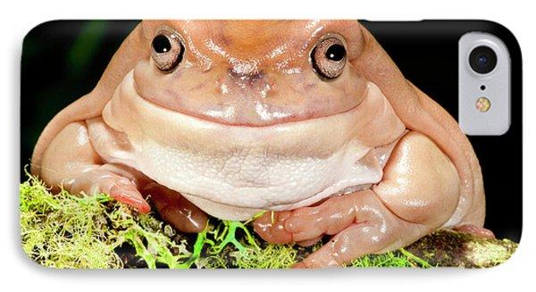White's Treefrog, Litoria Caerulea IPhone Case by David Northcott