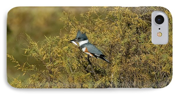 Belted Kingfisher With Fish IPhone Case by Anthony Mercieca