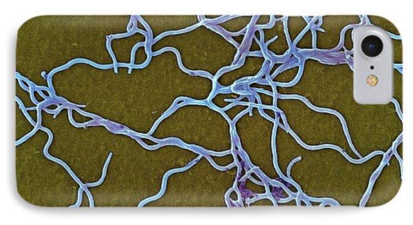 Borrelia Burgdorferi Bacteria IPhone Case by Ami Images/janice Haney Carr