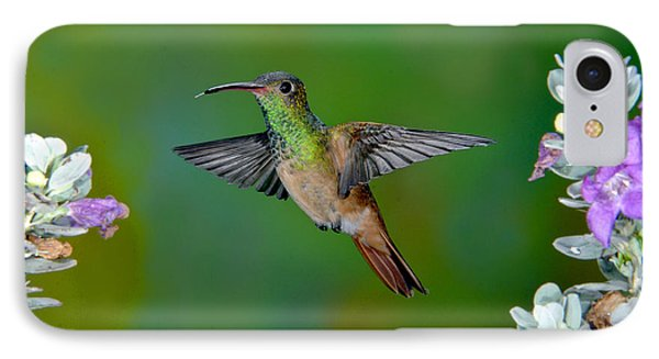Buff-bellied Hummingbird Phone Case by Anthony Mercieca