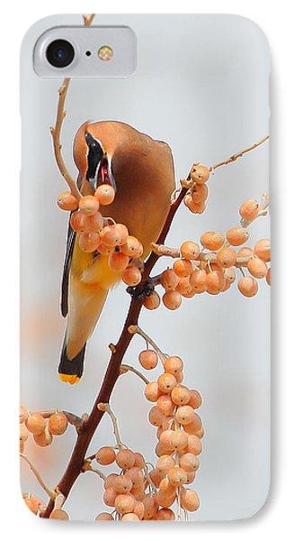 Cedar Wax Wing IPhone Case by Floyd Tillery