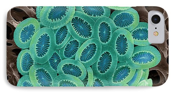 Coccolithophore IPhone Case by Steve Gschmeissner