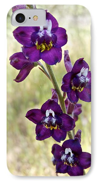 Cow Poison In Park Sierra-ca IPhone Case by Ruth Hager