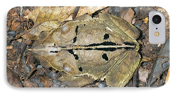 Crested Forest Toad IPhone Case by Dr Morley Read