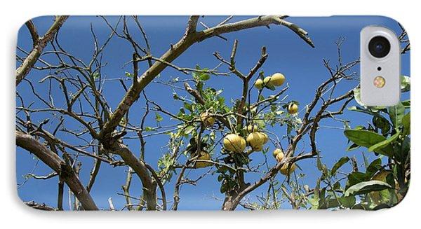 Diseased Grapefruit Tree IPhone Case by Jim West