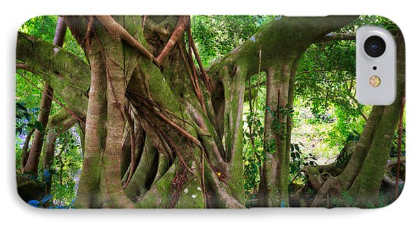 Kipahulu Banyan Tree IPhone Case by Inge Johnsson