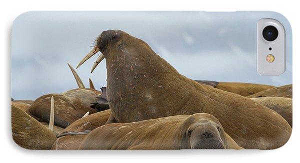 Norway, Svalbard, Torellneset IPhone Case by Jaynes Gallery