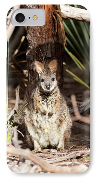 Tammar Wallaby (macropus Eugenii IPhone 7 Case by Martin Zwick