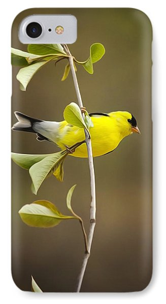 American Goldfinch IPhone Case by Christina Rollo