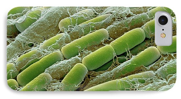 Bacillus Megaterium Bacteria IPhone Case by Steve Gschmeissner