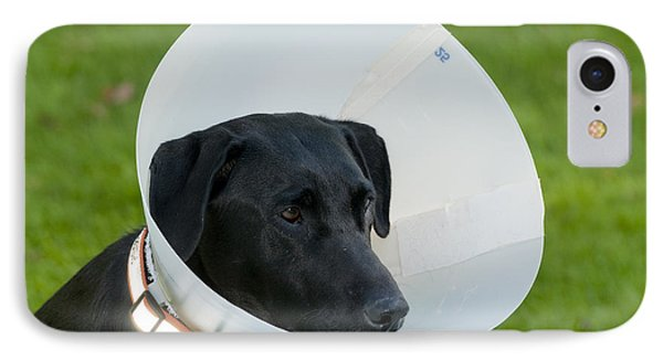 Black Labrador With Elizabethan Collar IPhone Case by William H. Mullins