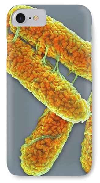 E. Coli Bacteria IPhone Case by Science Photo Library