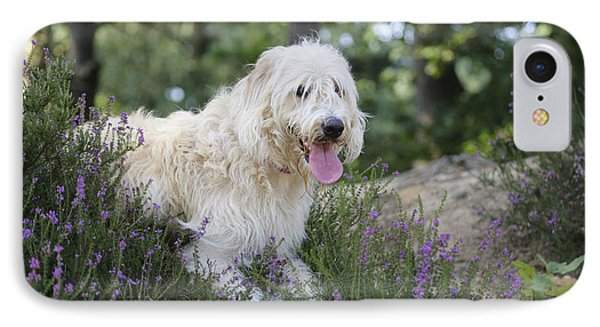 Labradoodle Dog IPhone Case by John Daniels