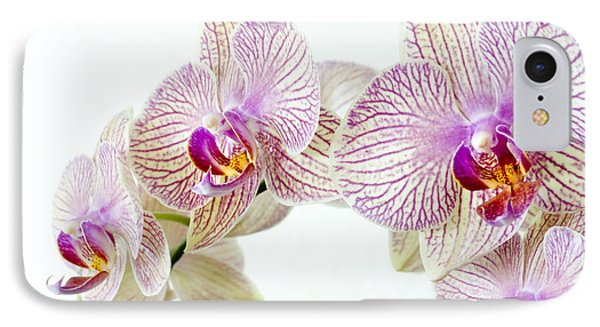 Phalaenopsis Orchid Phalaenopsis Sp IPhone 7 Case by Lawrence Lawry