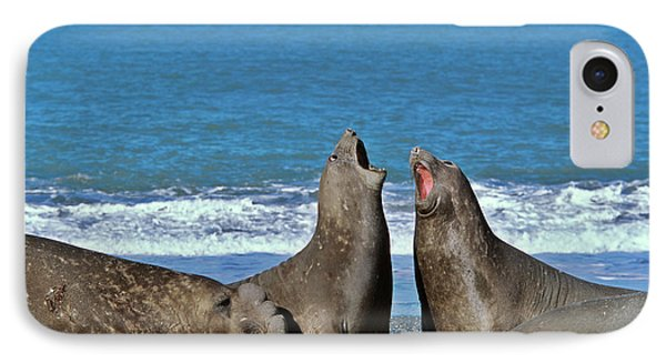 Southern Elephant Seal Female (cow IPhone Case by Martin Zwick