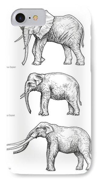 Elephant Evolution, Artwork IPhone Case by Gary Hincks