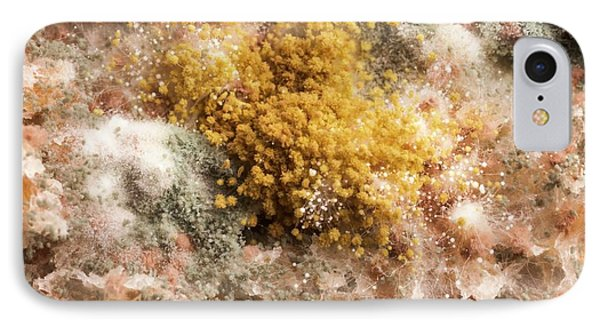 Mould On Bread IPhone Case by Science Photo Library
