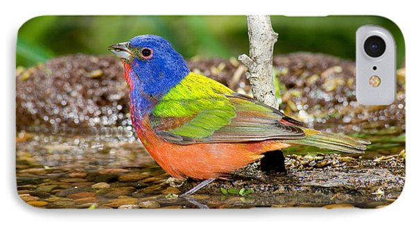 Painted Bunting IPhone Case by Anthony Mercieca