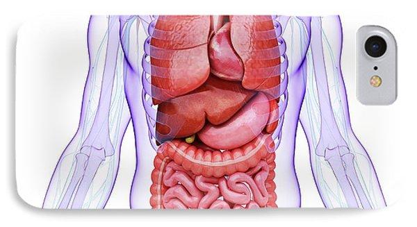 Human Internal Organs IPhone Case by Pixologicstudio
