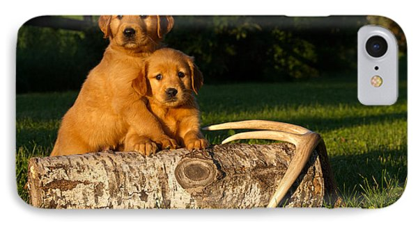 Golden Retriever Puppies Phone Case by Linda Freshwaters Arndt