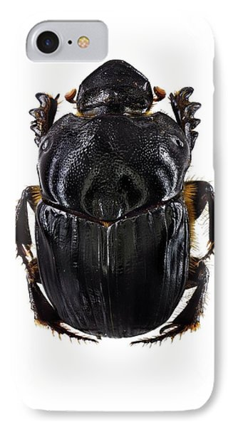 Scarab Beetle IPhone Case by F. Martinez Clavel