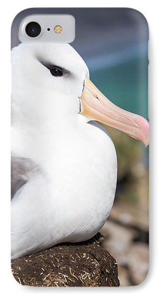 Black-browed Albatross (thalassarche IPhone 7 Case by Martin Zwick