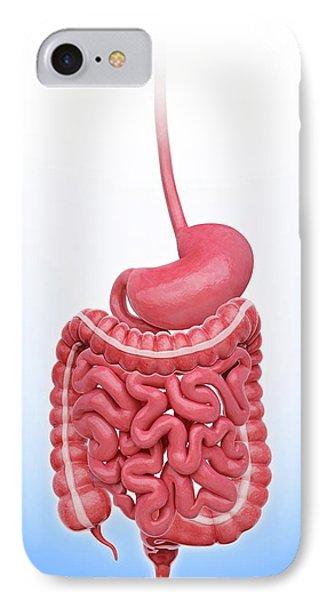 Human Stomach IPhone Case by Pixologicstudio