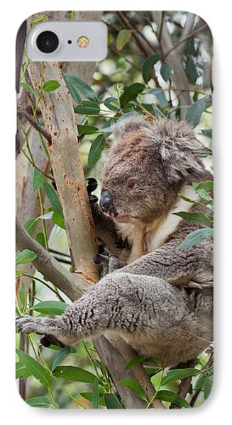 Koala (phascolarctos Cinereus IPhone Case by Martin Zwick
