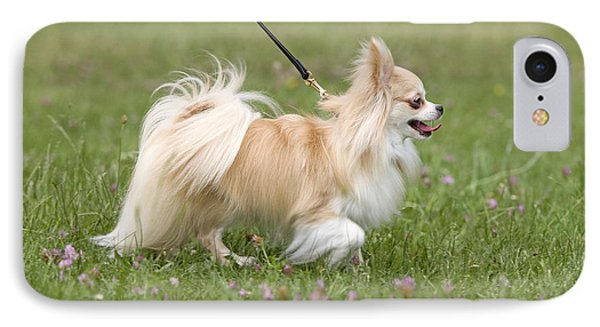 Long-haired Chihuahua IPhone Case by Jean-Michel Labat