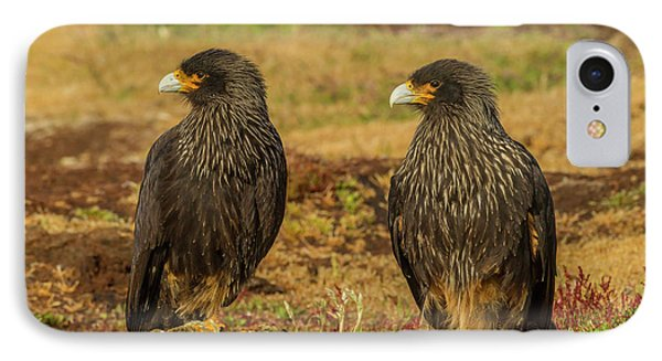 South America, Falkland Islands, Sea IPhone Case by Jaynes Gallery