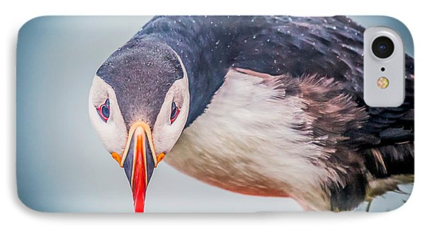 Atlantic Puffin Fratercula Arctica IPhone 7 Case by Panoramic Images