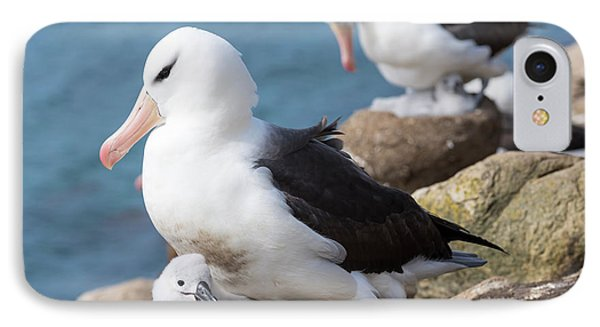 Black-browed Albatross (thalassarche IPhone Case by Martin Zwick
