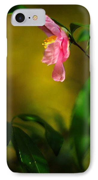 A Golden Day Portrait Of A Pink Camellia Phone Case by Rebecca Sherman
