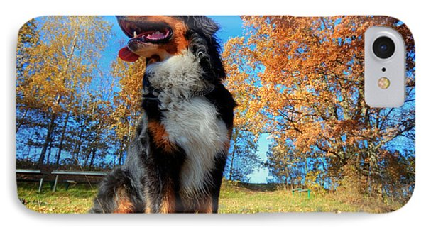 A Happy Bernese Mountain Dog Outdoors Phone Case by Michal Bednarek