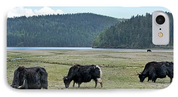 A Herd Of Yaks In Potatso National Park IPhone Case by Tony Camacho