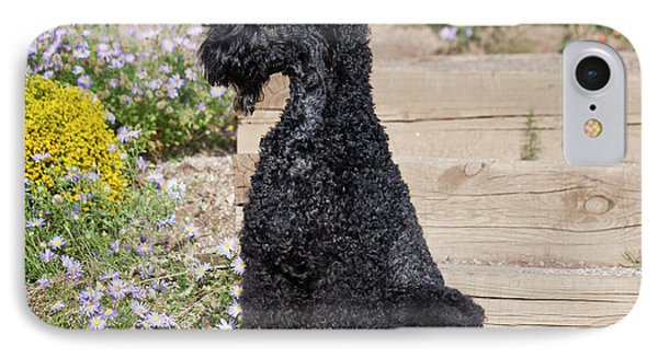 A Kerry Blue Terrier Sitting On Wooden IPhone Case by Zandria Muench Beraldo