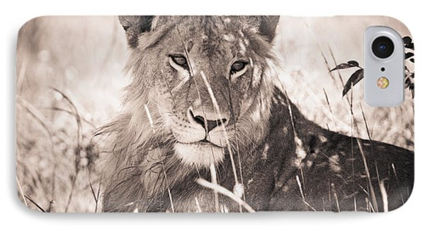 A Lioness Lays In The Shade Kenya Phone Case by David DuChemin