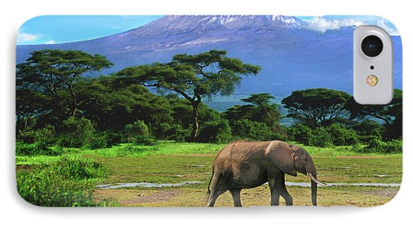 A Lone African Elephant (loxodonta IPhone Case by Miva Stock