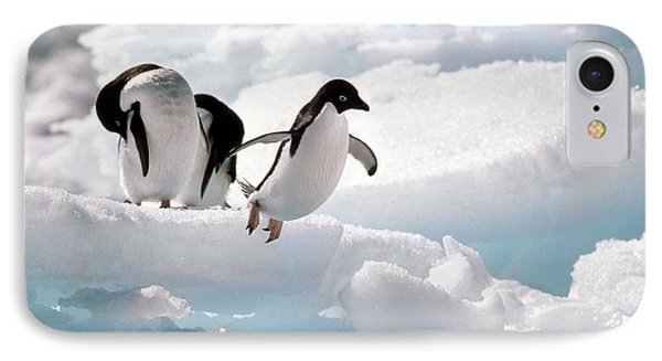 Adelie Penguins IPhone Case by Art Wolfe