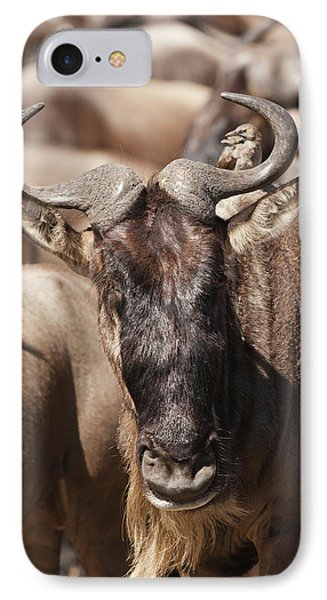 Africa, Kenya, Masai Mara Gr, Lower IPhone Case by Joe and Mary Ann Mcdonald