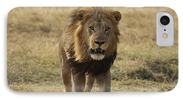 African Lion On Savanna Masai Mara Kenya IPhone Case by Hiroya Minakuchi