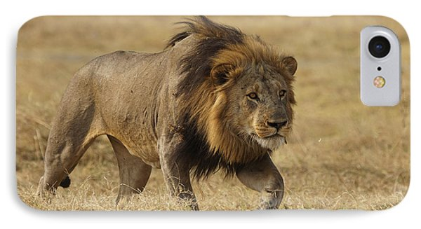 African Lion Stalking Masai Mara Kenya IPhone Case by Hiroya Minakuchi